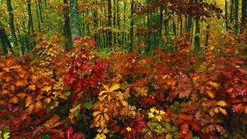 hojas de otoño en un bosque