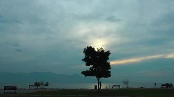 One Tree near the Seaside