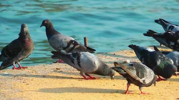 pombos perto do mar