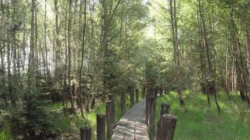 movendo-se por uma pequena ponte em uma floresta