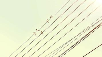 pássaros no fio video