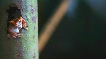 rana arborícola en un poste