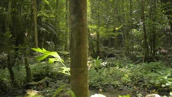 paisagem de um riacho entre plantas verdes na selva