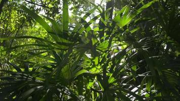 Lush Foliage Trees Under the Sunlight in A Tropical Forest video