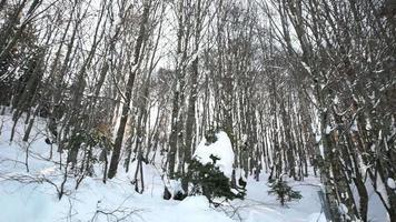 floresta nevada em bolu, turquia video