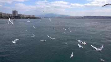 Seagulls Flying Slow Motion video