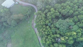 camino forestal de montaña