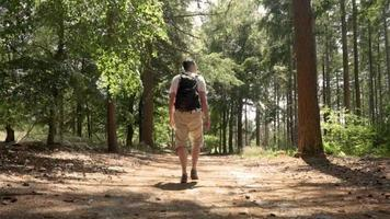Man hiking alone in a forest on a sunny day