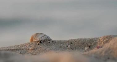 grande concha na areia perto do mar. video