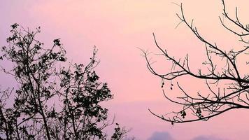 silueta de árboles sobre un cielo al atardecer video