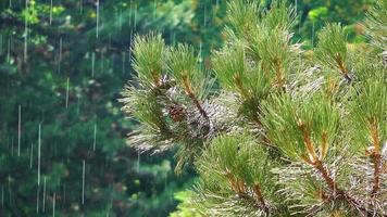 folhas de árvores e a chuva
