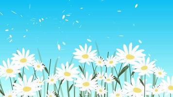flores de margarita bailando en el viento