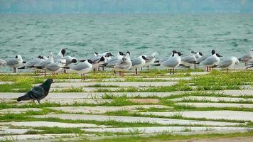 pássaro gaivotas e pombos