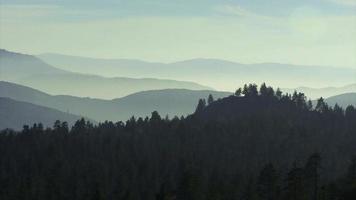 un paisaje de bosque de pinos brumoso