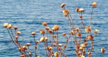 vista para o mar atrás da planta da ilha thorn video