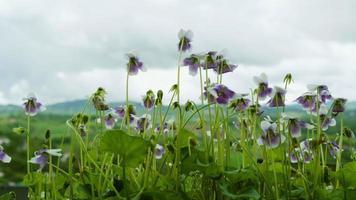 el campo de flores del bosque fue arrastrado suavemente por el viento.