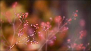 pequeñas flores rojas video