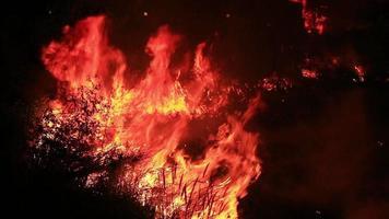 fuego salvaje en el bosque. video