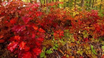 un bosque de colores otoñales