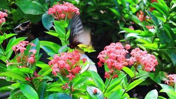 mariposa en el jardín de flores
