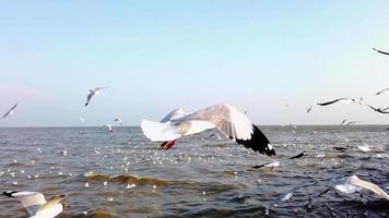 bandadas de gaviotas migrando