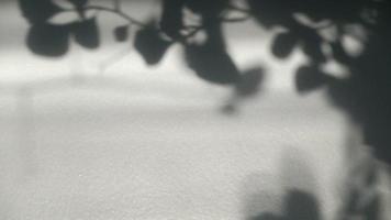 balanceo de hojas sombra sobre fondo blanco