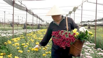 The worker with basket of flowers checks product in farm video