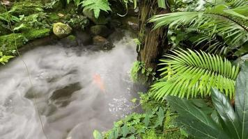Tropical Rainforest Garden with Fog Over the Stream video