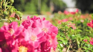 flores en el viento en