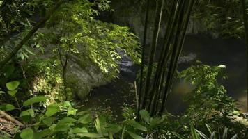 bela paisagem de uma pequena cachoeira na selva