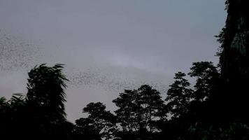 Cloud of bats go out from a cave at cliff in the mountain