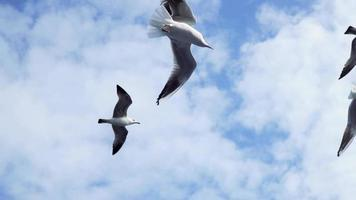 Seagulls are flying in slow motion video