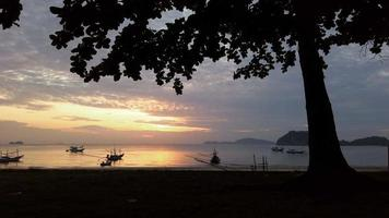 silueta de un árbol en una playa al amanecer