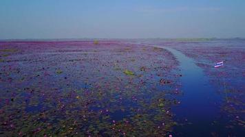 lago de lótus vermelho em udonthani na tailândia video