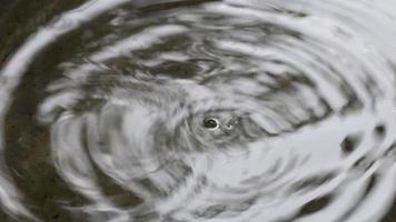 gotas de água ondulam video