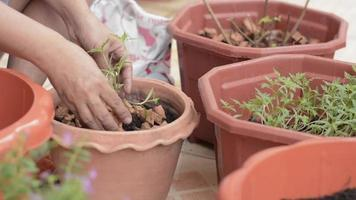 Hand of woman planting young trees in a clay pot.