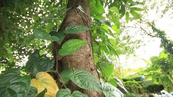 hojas verdes en un árbol