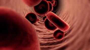 fundo de células sanguíneas video