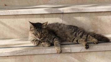 Tabby Cat Is Stretching Then Resting On Stairs video