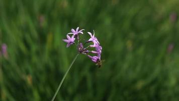 flores y una abeja en cámara lenta