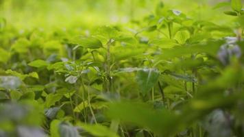 chuva caindo nas folhas verdes de uma planta