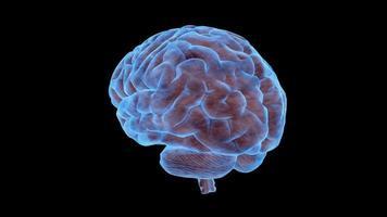 un cerebro humano gira