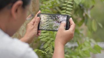 botânica tirando foto de samambaia video