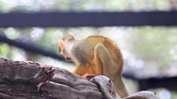 singe sur un arbre. video