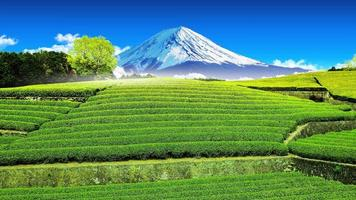 plantação de chá na parte de trás com vista para o Monte Fuji.