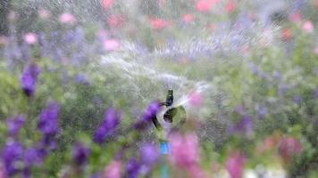 sprinkler de água pulveriza flores