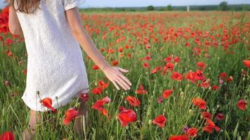 mano femenina acariciando amapolas rojas flores.