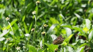 borboleta voando sobre uma flor amarela