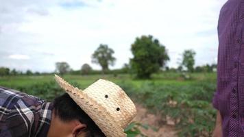 fazendeiro levanta várias caixas de vegetais entregues aos clientes video