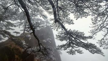 árvores congeladas de inverno floresta de madeira video